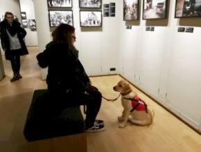 Muzej ratne fotografije u Zagrebu otvorio vrata psima pomagačima [FOTO]