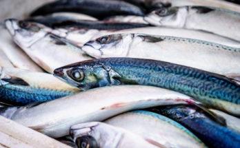 Hrvatska riba je sve popularnija delicija u inozemstvu, evo brojki koje to potvrđuju